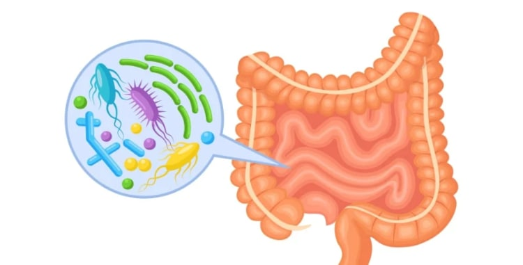 your microbiome - bacteria