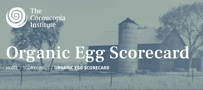 organic eggs rated