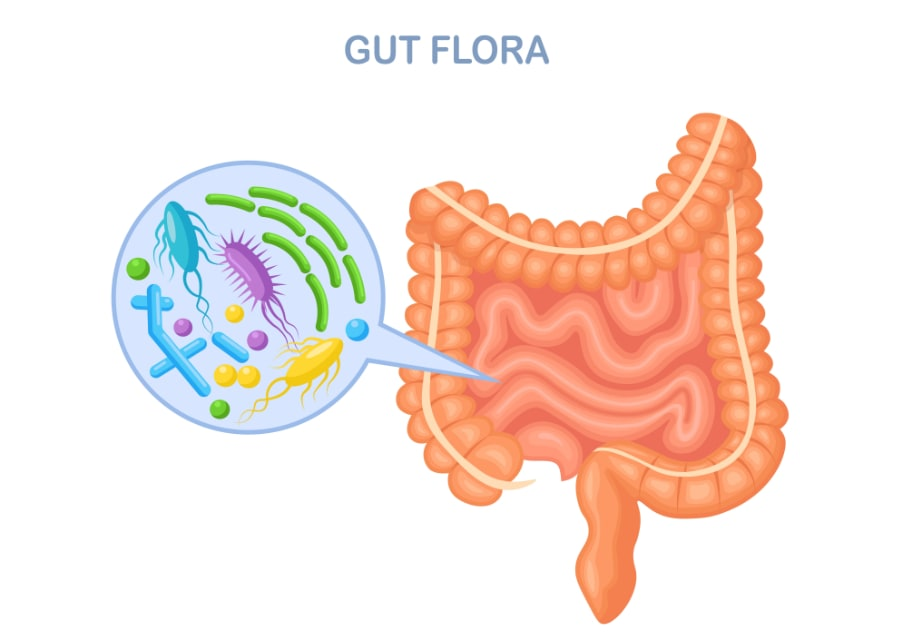your microbiome