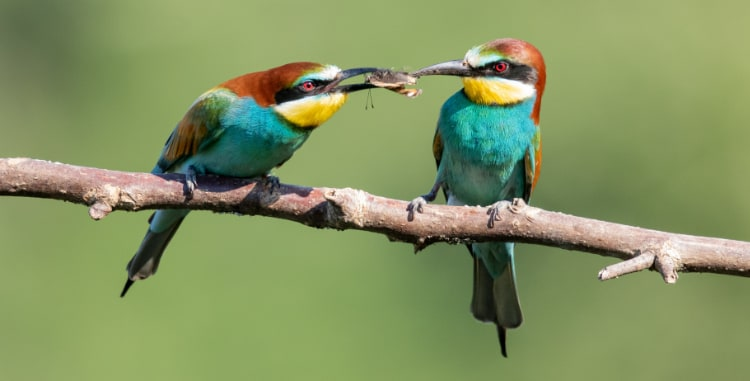 birds sharing food