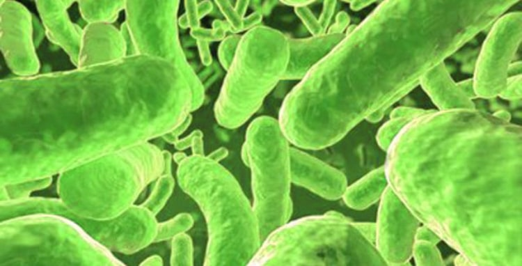food poisoning bacteria