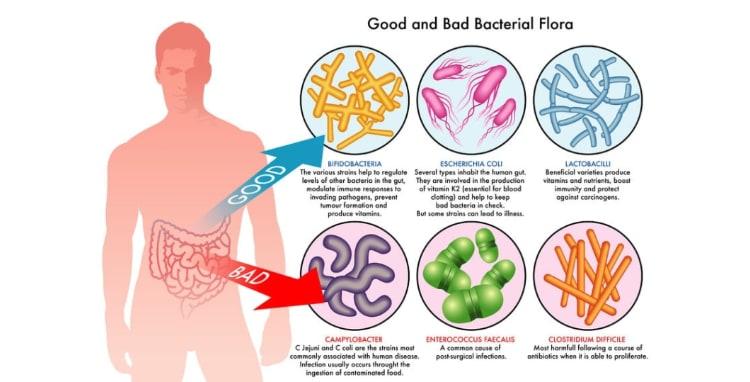 food poisoning good bad flora