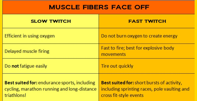 DNA testing and muscle fibers