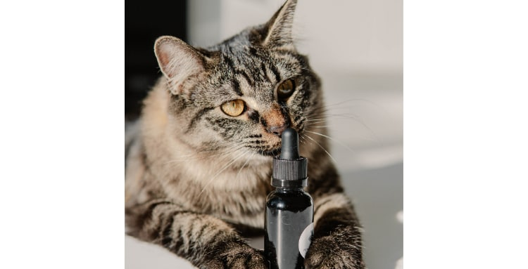 Cats and cbd oil